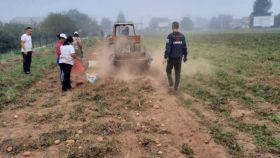 Na području MIZ-e Kiseljak u prethodnim danima podignuti usjevi sa vakufskih parcela