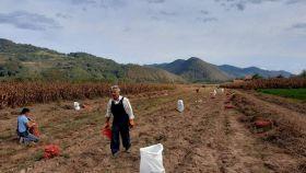 MIZ Bratunac realizovao akciju vađenja krompira na vakufskim parcelama