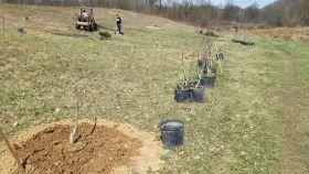 Primjer dobre prakse: Džemat Dubrave Gornje zasadio deset dunuma oraha