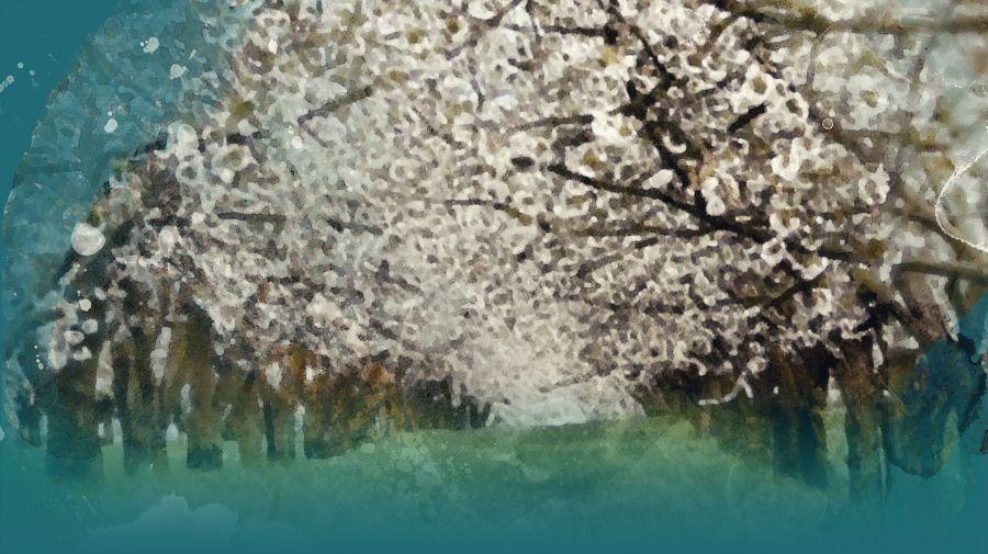Vakufski fond za kultiviranje vakufskih parcela